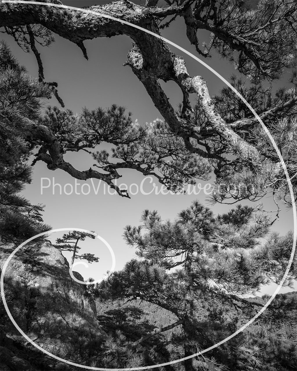 Photo cropping at 4:5 aspect ratio with golden spiral