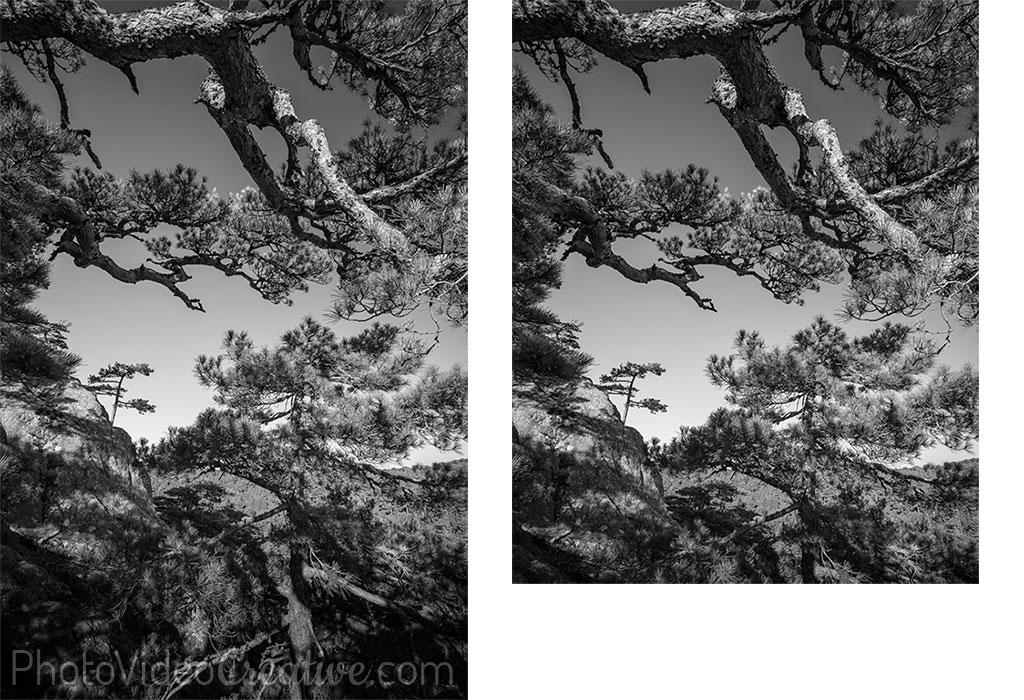 Recadrage 5x4 d'une photo de paysage noir et blanc